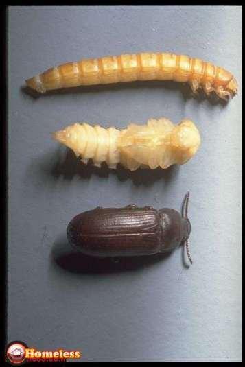 כמה זנים של חרקים יש בעולם ?