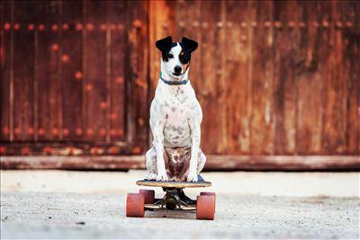אילוף כלבים זה מקצוע!!
