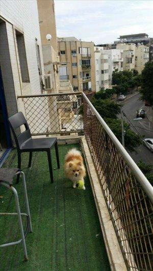 פנטהאוז לשותפים 4 חדרים בתל אביב יפו דיזנגוף