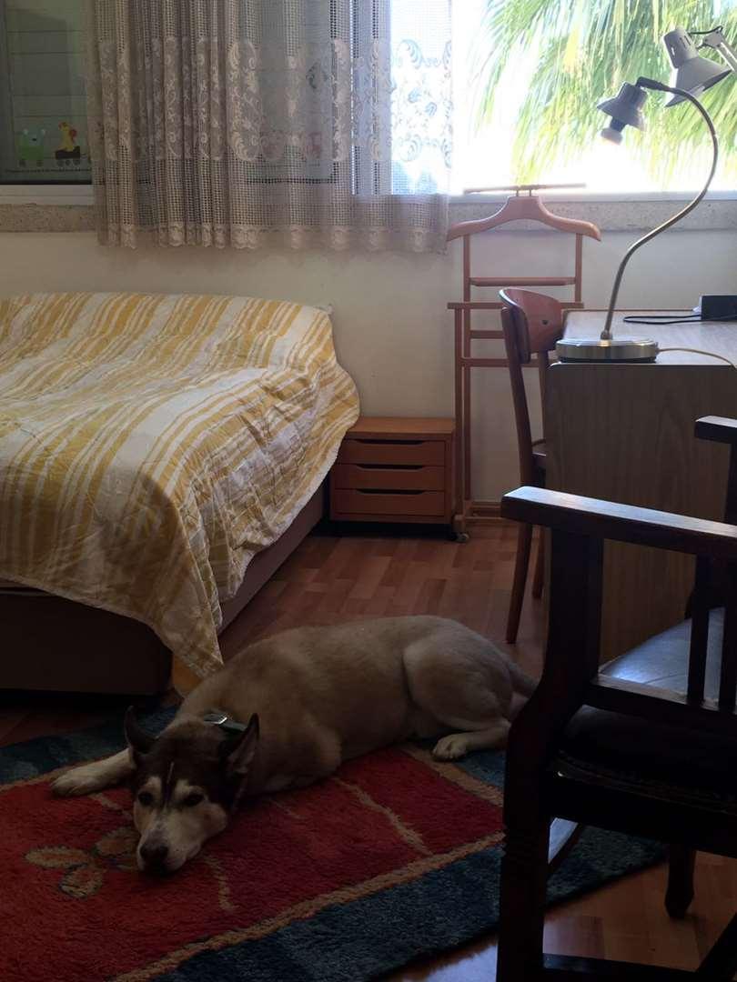 דירה, 1 חדרים, אסתר המלכ, הרצליהה