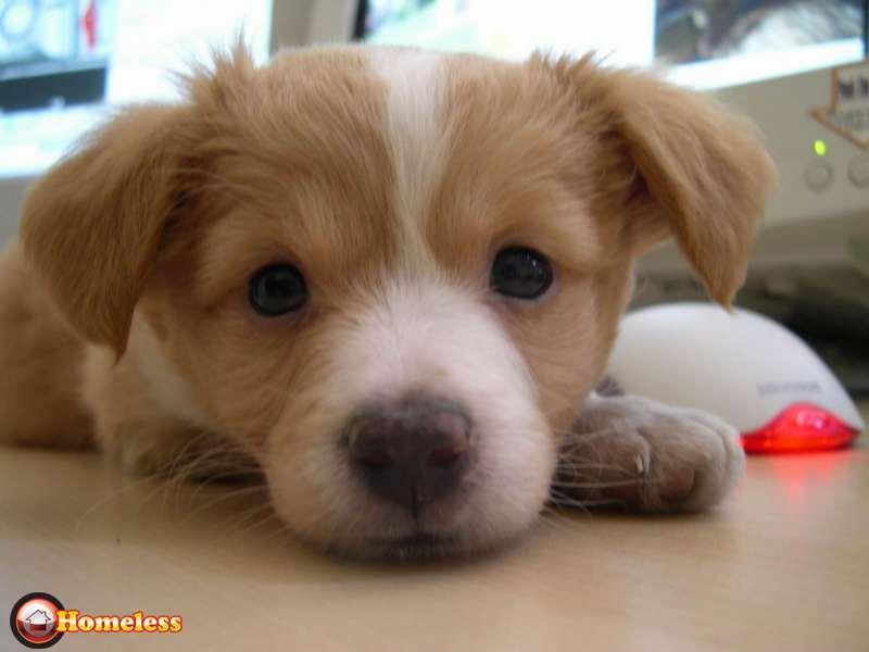 פנסיונים - פנסיון לכלבים