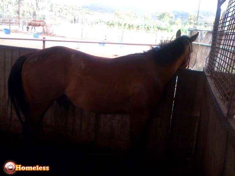 סוסים - קווטר