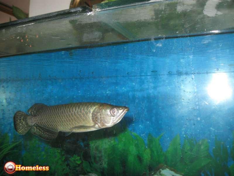 דגים - טורפים