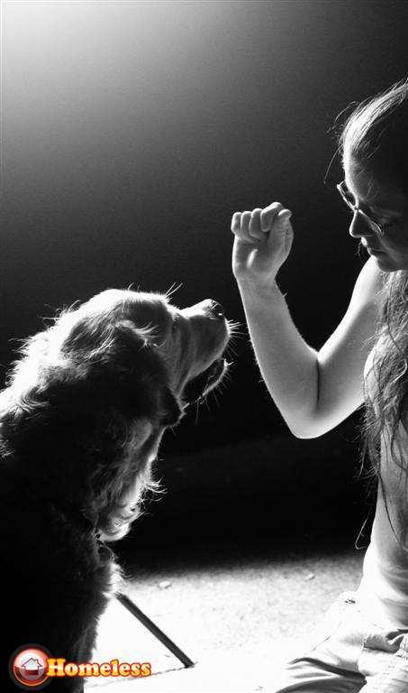 כלבים - בורדר קולי