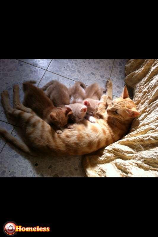 חתולים - כללי