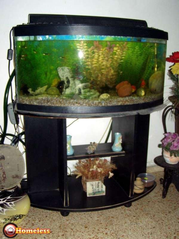 מדהים אקוואריום   דגים   חיות מחמד הומלס HU-13