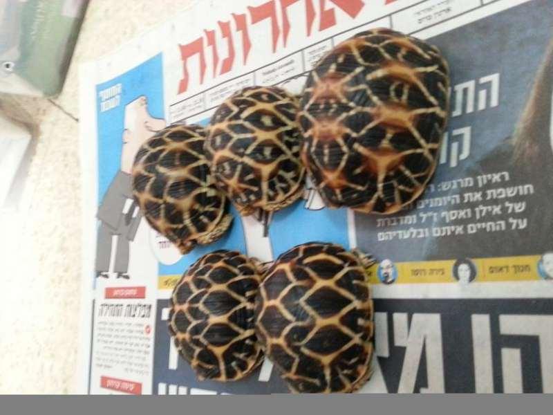 זוחלים - צבים