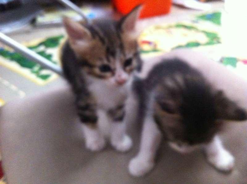 חתולים - מעורב