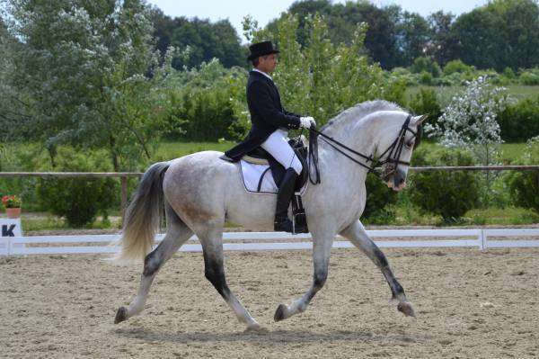 סוסים - אנדלוסי