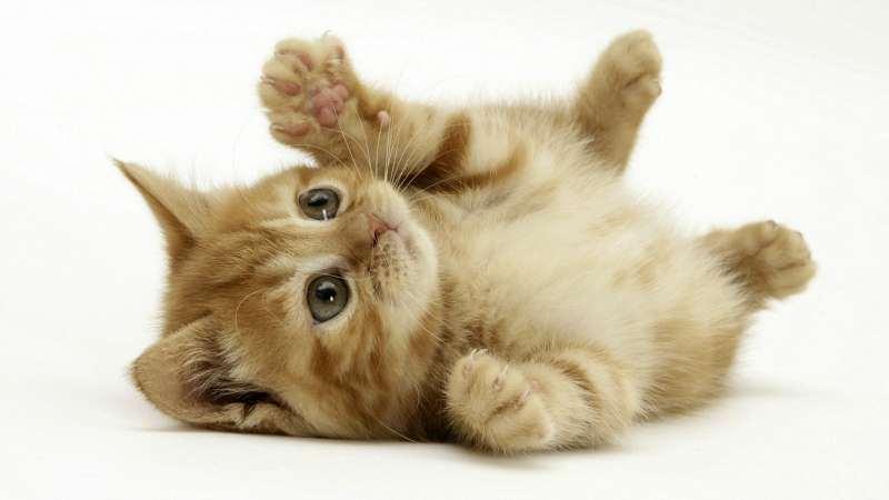 פנסיונים - פנסיון לחתולים
