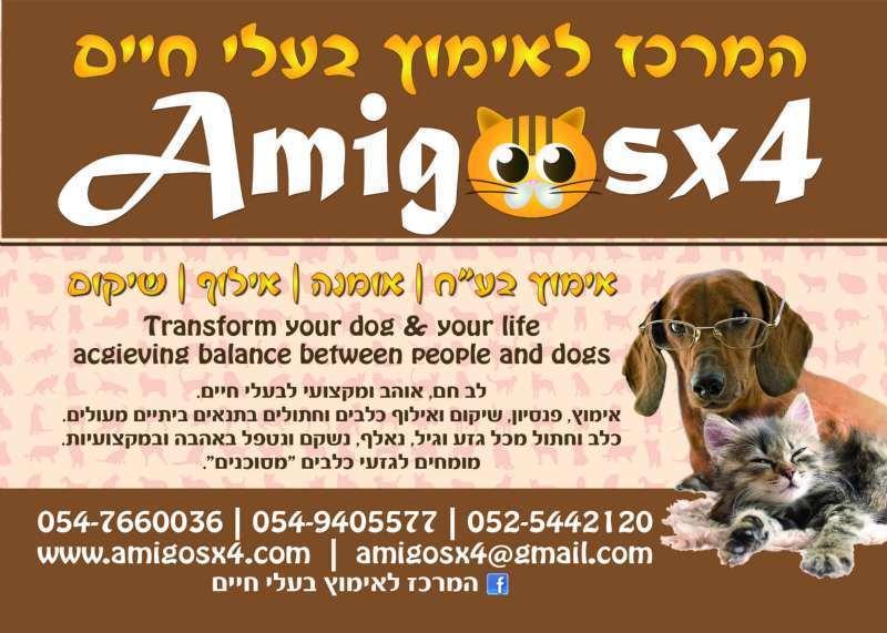 עדכני כלבים לאימוץ באשקלון, מודעה 46475 | כלבים - לוח חיות מחמד | הומלס JX-84