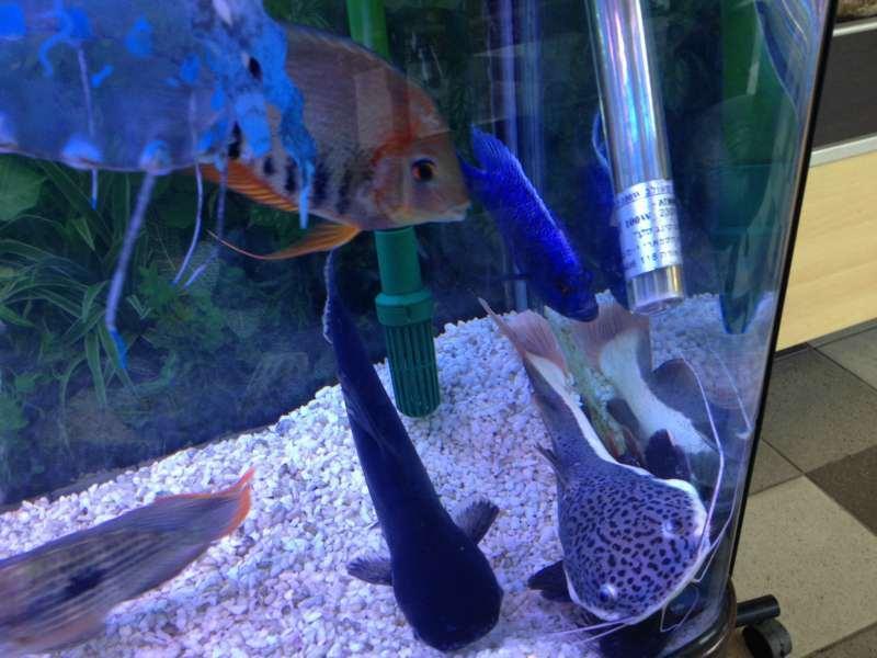 דגים - אחר