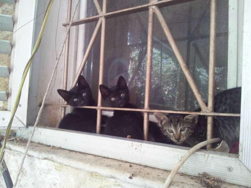חתולים - אחר