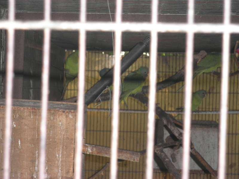ציפורים - כללי
