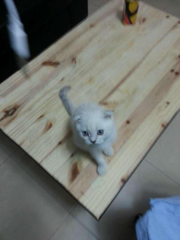נפלאות חתולים בבאר שבע והסביבה   חיות מחמד הומלס WM-08