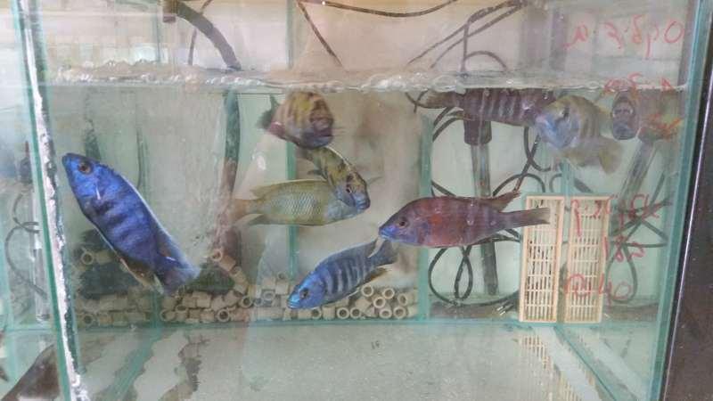 דגים - דגים טרופים