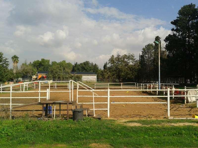 סוסים - ציוד ואביזרים