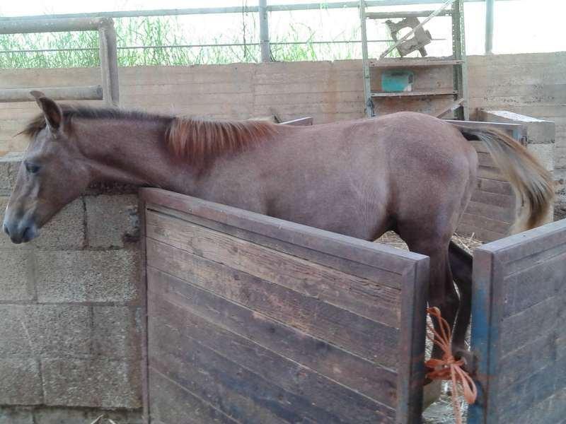 סוסים - מעורב