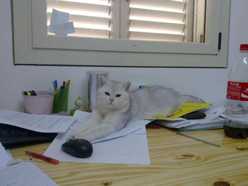 ניס חתולים בבאר שבע והסביבה   חיות מחמד הומלס CJ-48