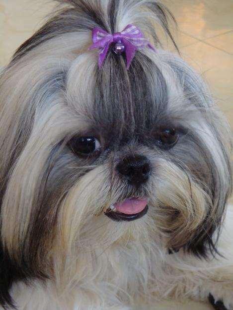 תמונה 3 ,כלבים אחר   גזעים קטנים למכירה בברקן