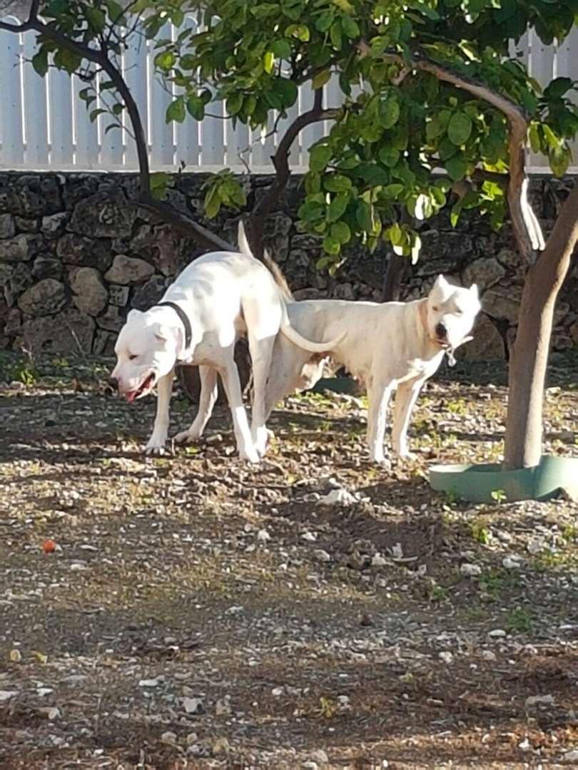 כלבים - אחר