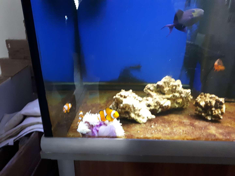 דגים - דגי מים מלוחים