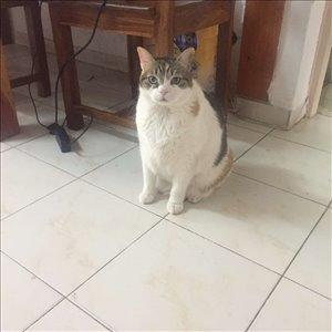 חתולים כללי