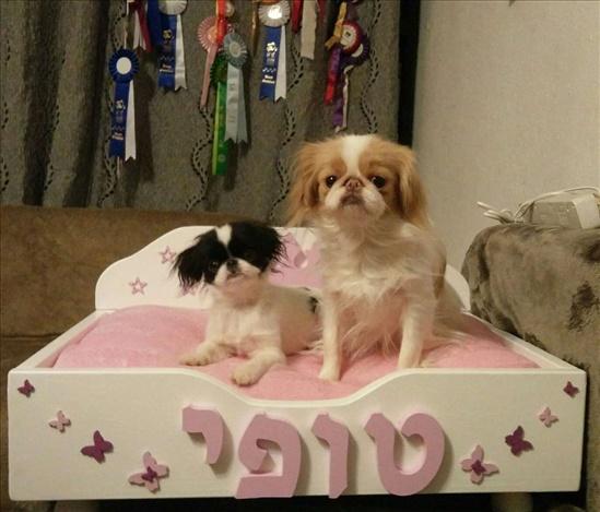 מיטות מעוצבות לכלבים