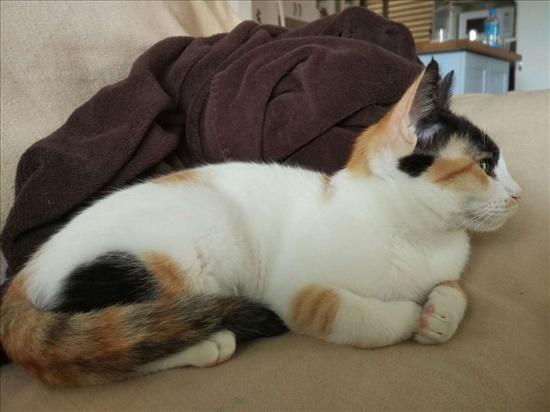 נונה חתולים - אחר