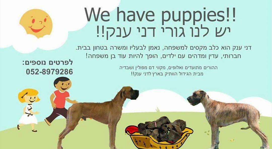 כלבים - דני ענק