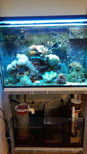 דגים דגי מים מלוחים חדרה והסביבה