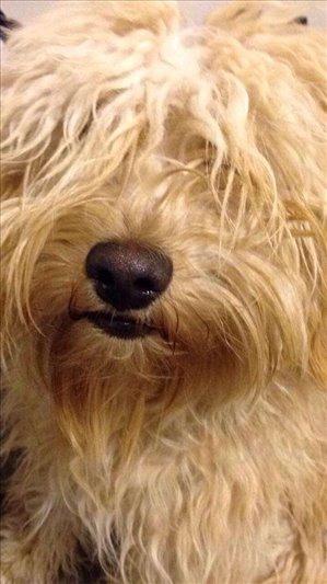 כלבים מעורב חיפה והקריות
