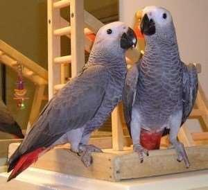 ציפורים -