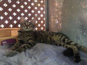 חתולים כללי חיפה והקריות