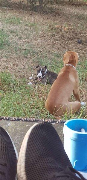 כלבים אחר מודיעין והסביבה