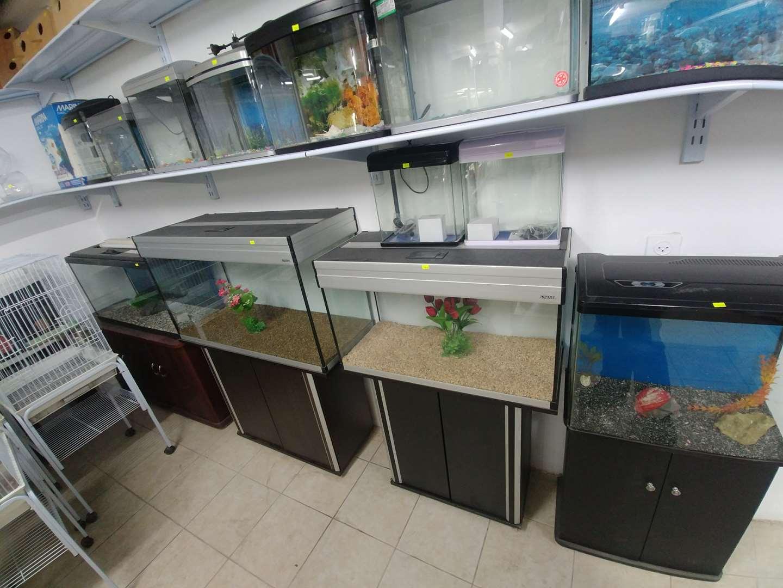 תמונה 4 ,דגים אקוואריום   פורמולה למכירה בטירה