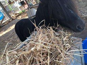 סוסים - סוסי פוני
