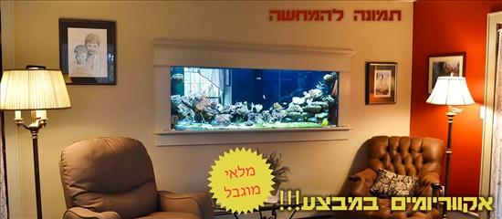 אקווריומים דגים - אקוואריום