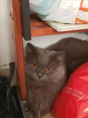חתולים אחר מודיעין והסביבה