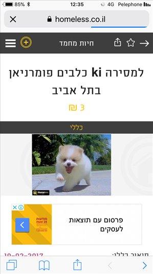 כלבים פומרניאן חיפה והקריות