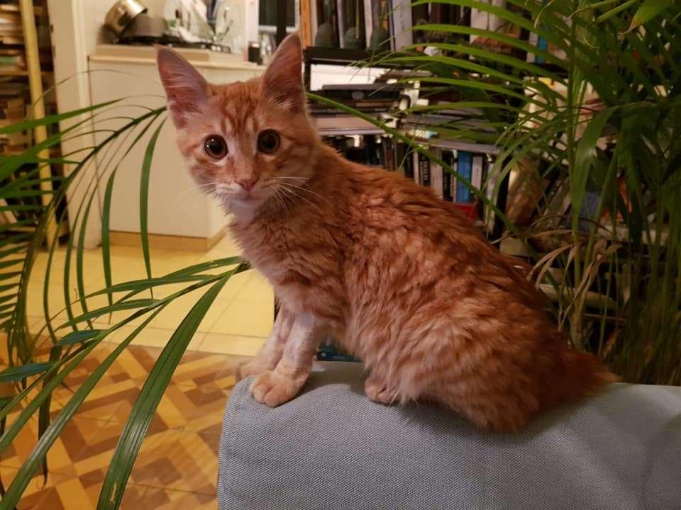 חתולים - dhs