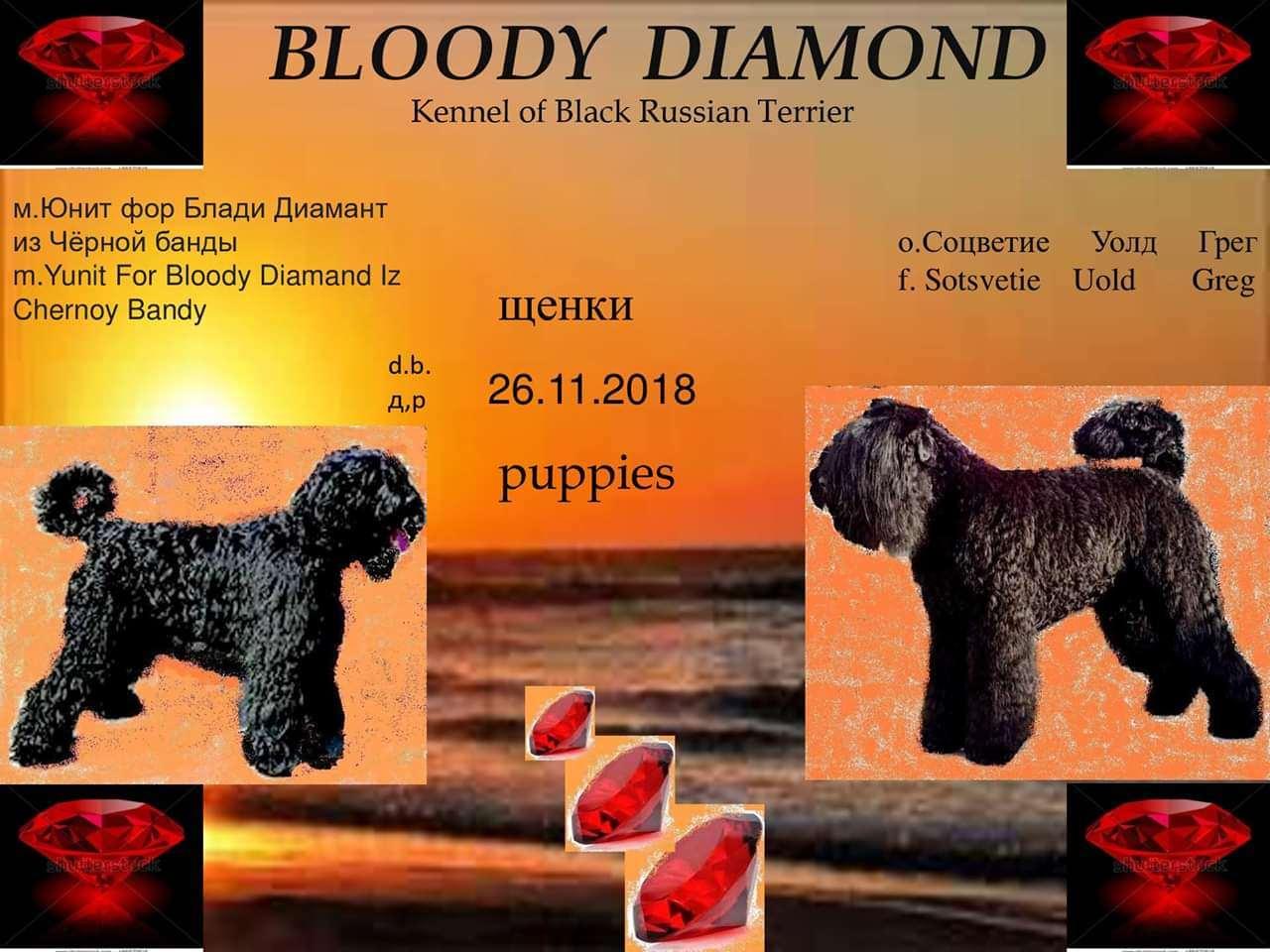 כלבים - טרייר רוסי שחור