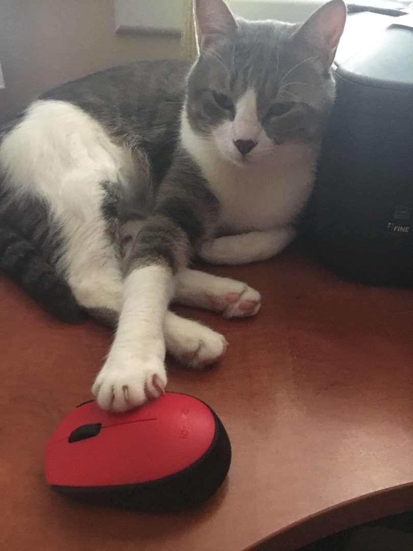 תמונה 2 ,חתולים אחר   בובו למסירה בנתניה