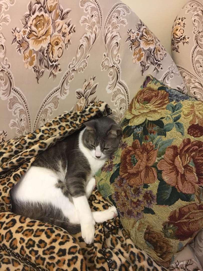תמונה 3 ,חתולים אחר   בובו למסירה בנתניה