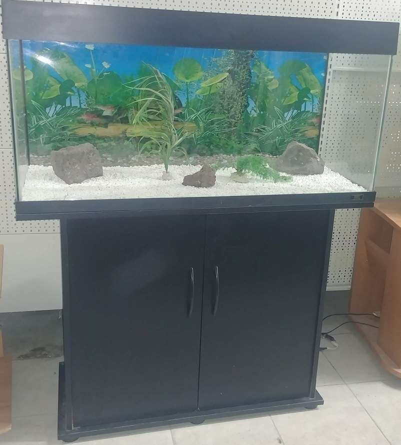 דגים - אקוואריום