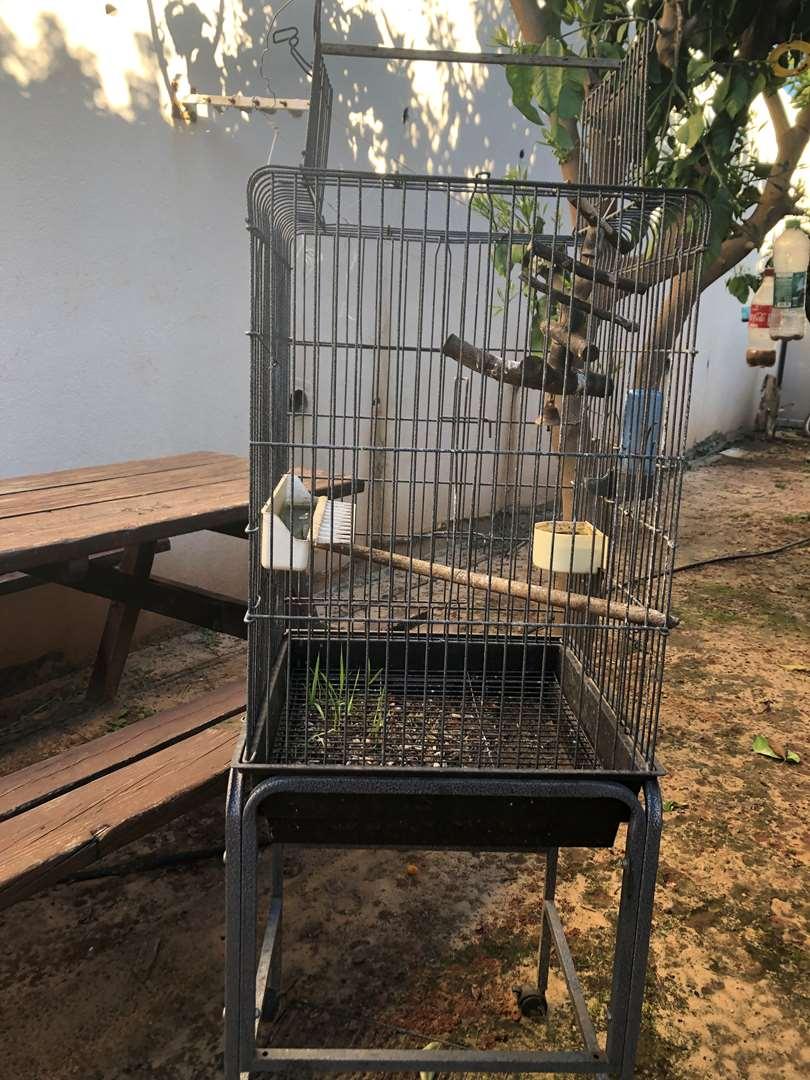 ציפורים - ציוד ואביזרים