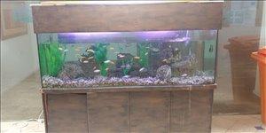 דגים אקוואריום