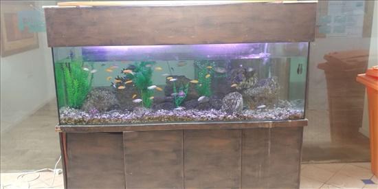 דגים  דגים - אקוואריום