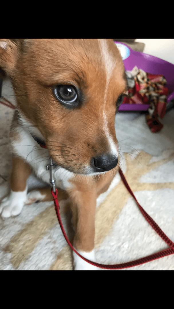 כלבים - מעורב