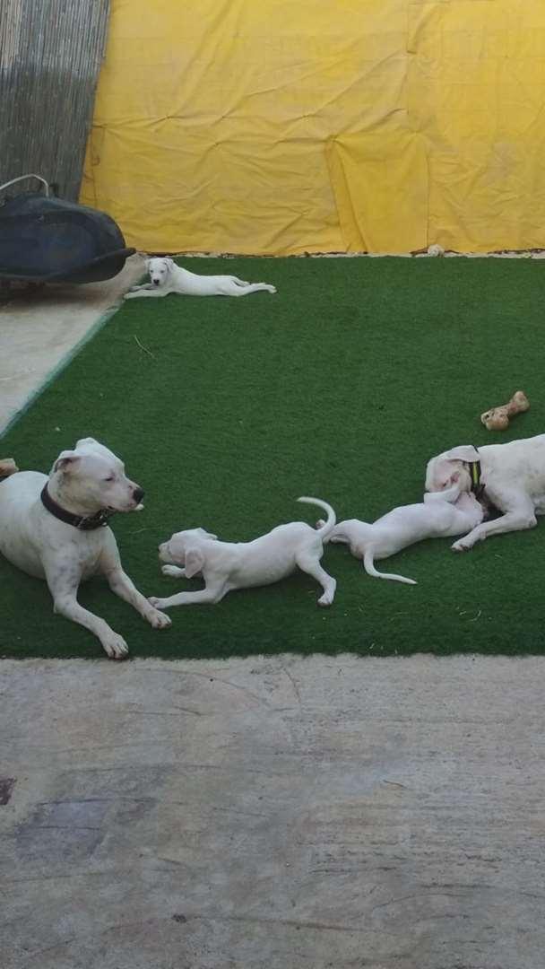 כלבים אחר